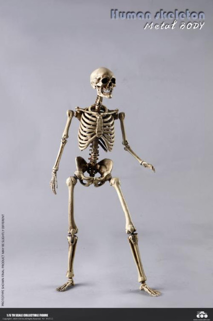 Human Skeleton Diecast 1:6 Scale Figure