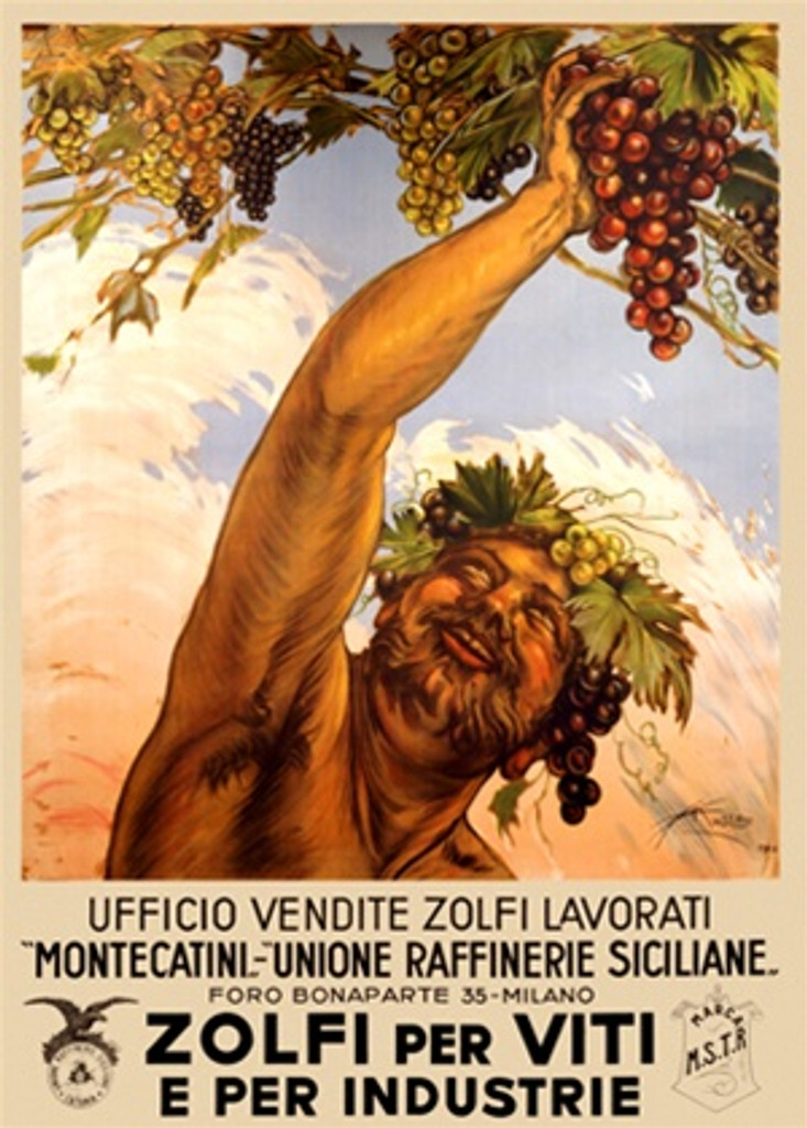 Zolfi per Viti by Mazza 1910 Italy - Vintage Poster Reproductions. This vertical Italian wine and spirits poster features Bacchus in his crown of grapes and leaves reaching to grab a bunch of grapes from the vine. Giclee Advertising Print. Classic Posters