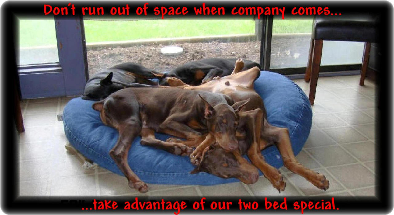 Blue Jean  Bed for 2 Dobermans