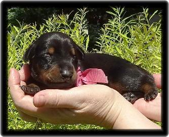 Eliza as a baby before this little dobes eyes are opened