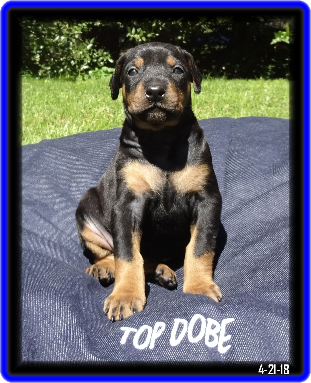 Little Joe - completed SP program - now the youngest King in Beckly WV