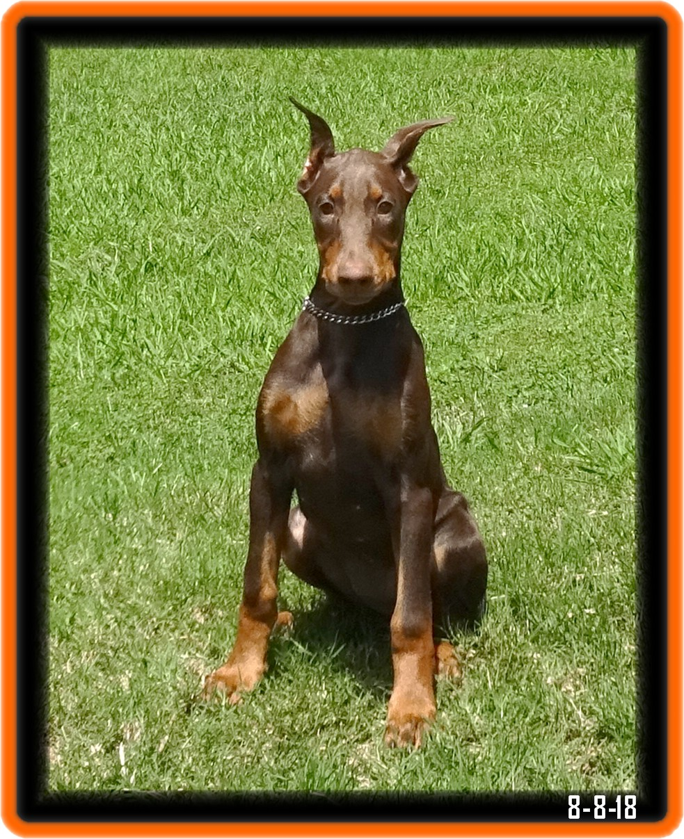 Hoytt's Lady Astor...Cosala Jocotepec Jalisco, Mexico.  In CYA2 training /Reserved