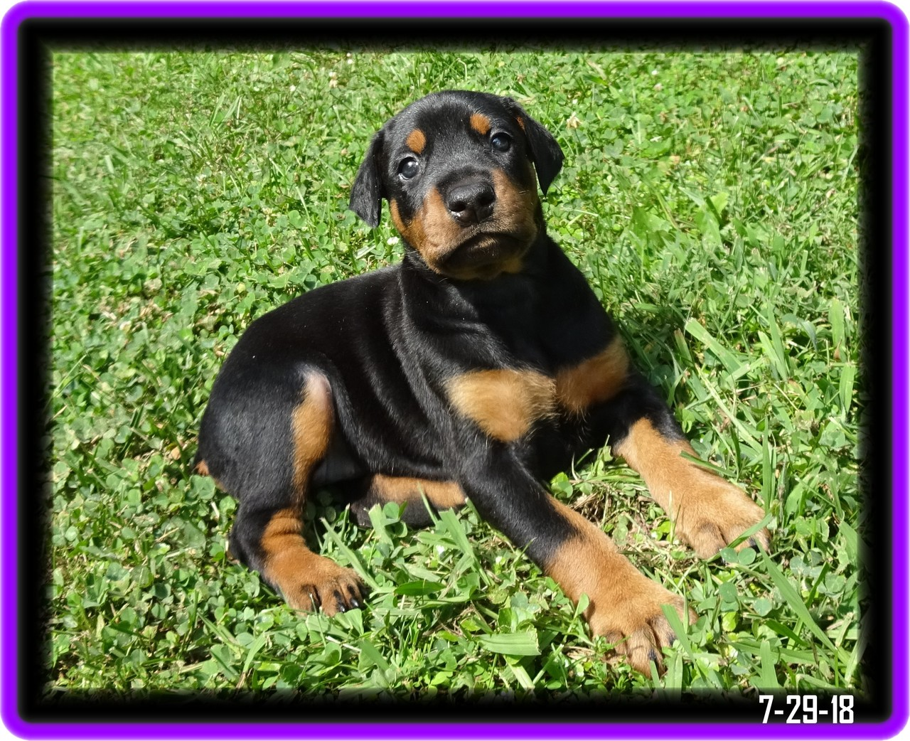 Lacey - Star baby / Available  In CYA program