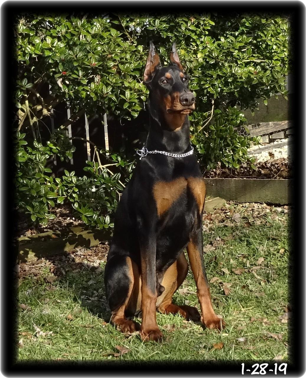Dutch was Wilfred / Star baby  ...  CYA Level 1 training - now in Hawaii