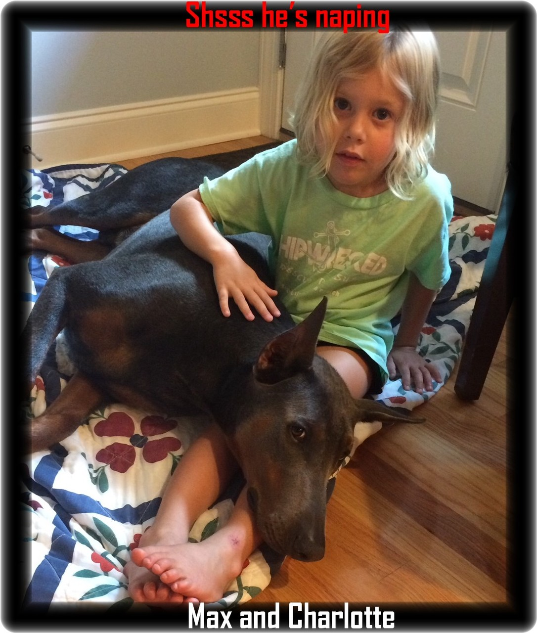 Crowe's Blue Maximus von Hoytt / Ooltewah TN - pups born 9-3-18