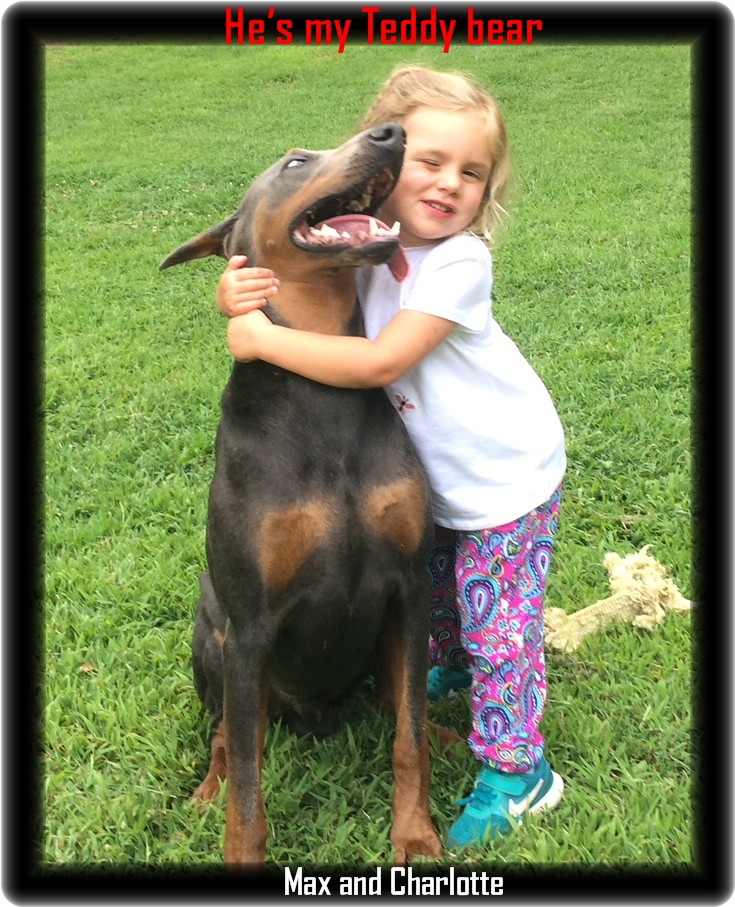 Mica - Zoey & Max pup / Available