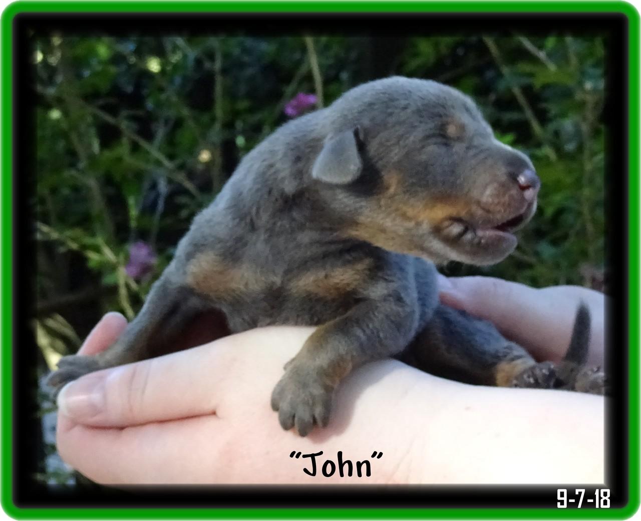 Jon - Zoey and Max boy ... born 10-3-18  in training  / Charleston SC
