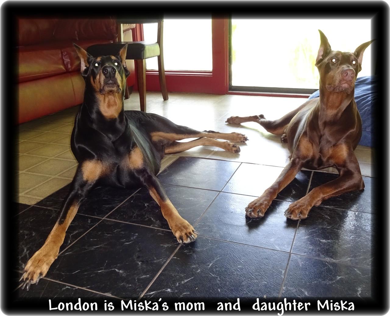Miska & Kodiak pup Skona - Reserved /Kingsport TN