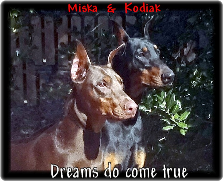 Magic - Miska & Kodiak pup born 10-20-18  -  in training planned for Grand Victor Program Available