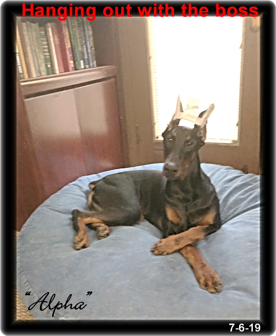 Alpha  - Delilah & Major born 11-12-18  ... in training - Reserved soon to move to Charlotte NC