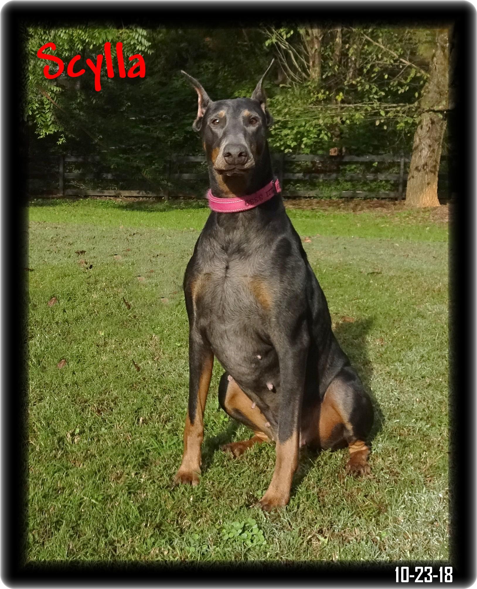 Nova - Scylla & Caspian pup  born 12-15-18 in training - AVAILABLE