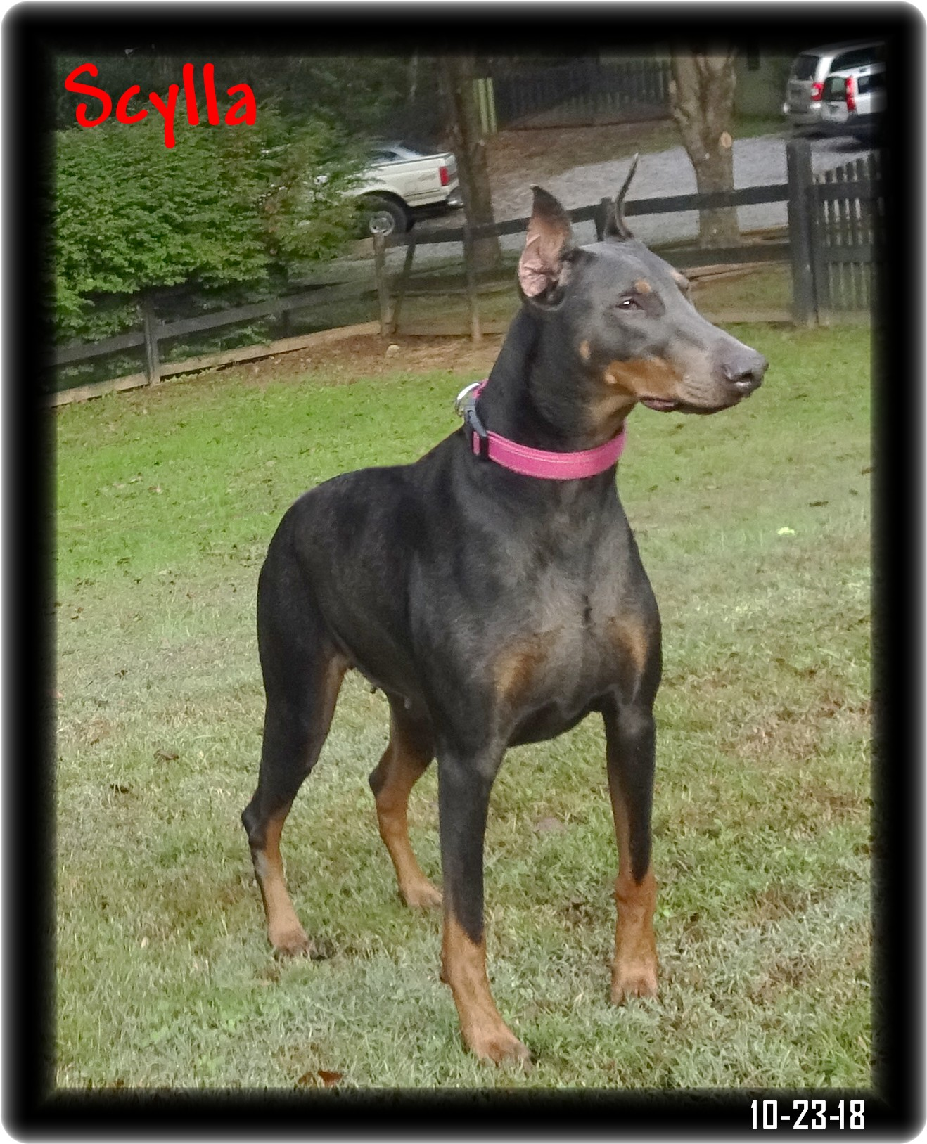 Misty born 12-15-18 out of Scylla & Caspian  - in training ... Reserved ...New Port TN