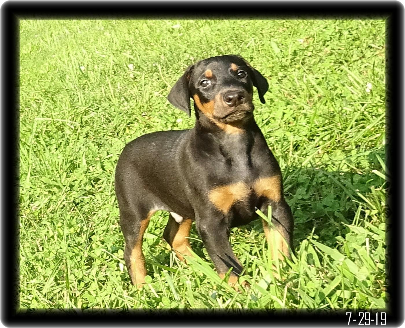 Nitro was Milo ... Miska and Kodiak's kid born 6-10-19 ... Cordova Tn. - Established client