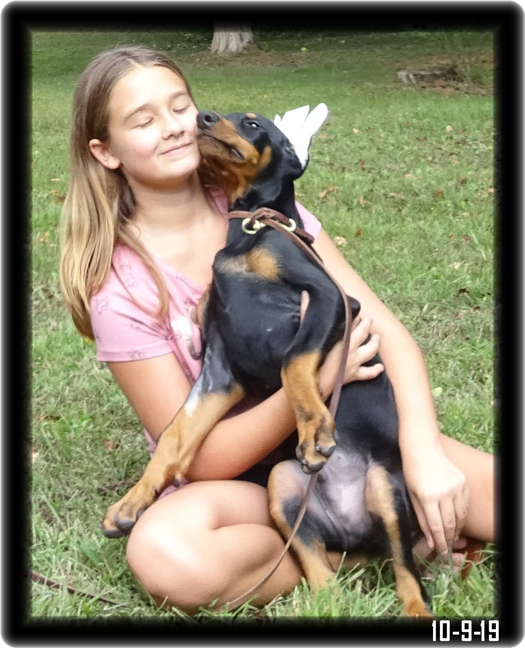 Gunner...born 7-21-19 from Greta and Caspian - reserved over a year ago and is a future Top20 Dobe now home in Louisville KY