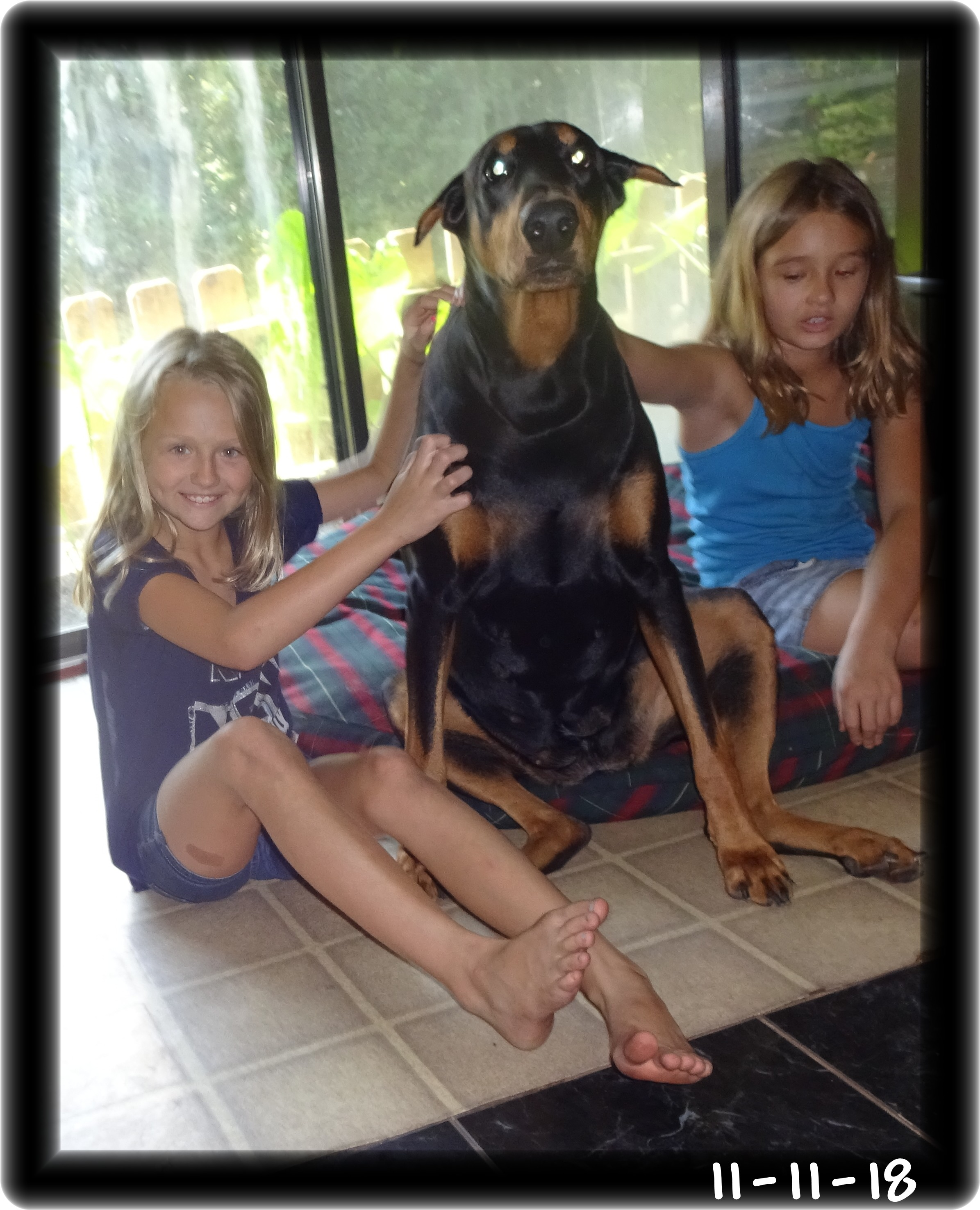 London & Caspian Mr. Hoytt's kids --- London is Miska's mom - Mr. Hoytt's first Dobe American Kennel Club Ch. Hoytt's Poco CD born 1958.