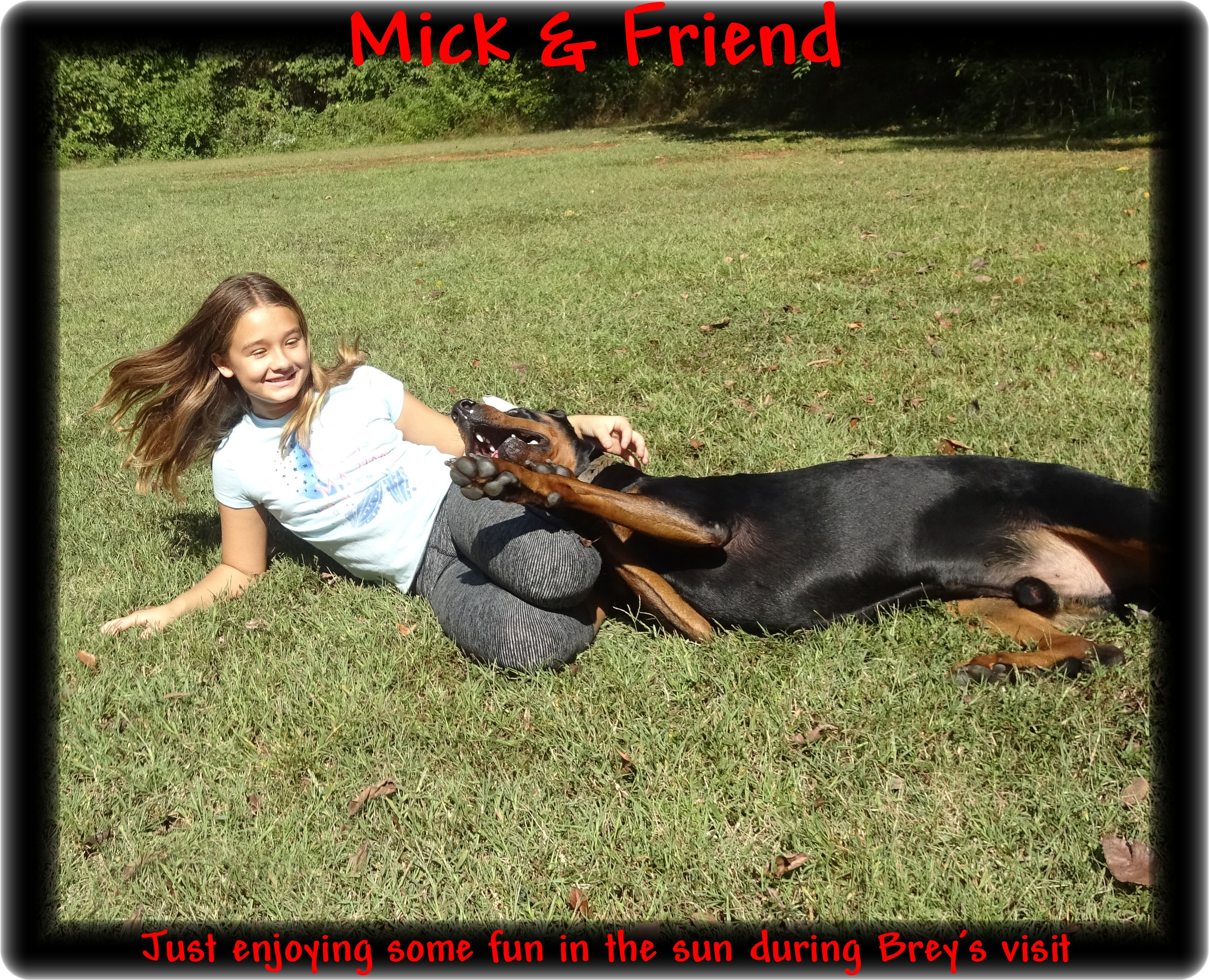 Mick formally Hoytts Midnight Rambler CGC HOME Palm Beach FL. is the proud daddy of Buffy's pups- nine shinny black & rust super Dobes on 12-3-19  - scroll to see his video ... also see Boo, Micks other half - in training