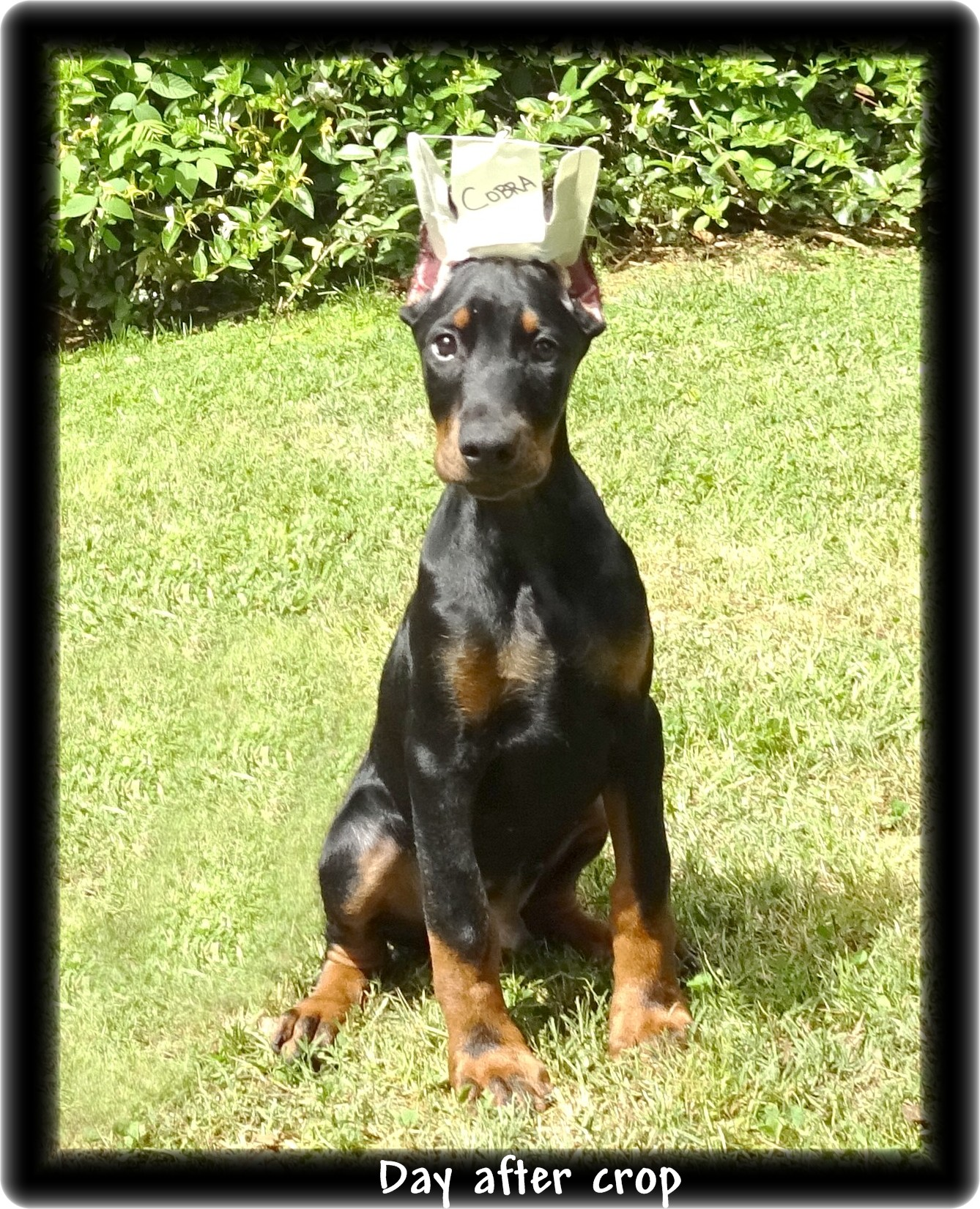 callie-pup-mason-was-thunder-038.jpg