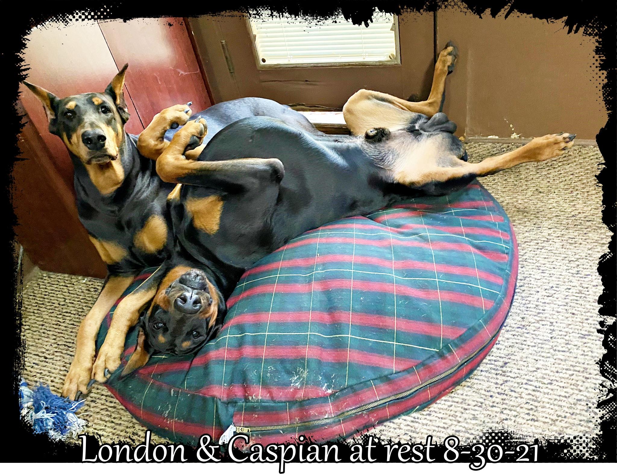 caspian-on-his-bed-img-5314.jpg
