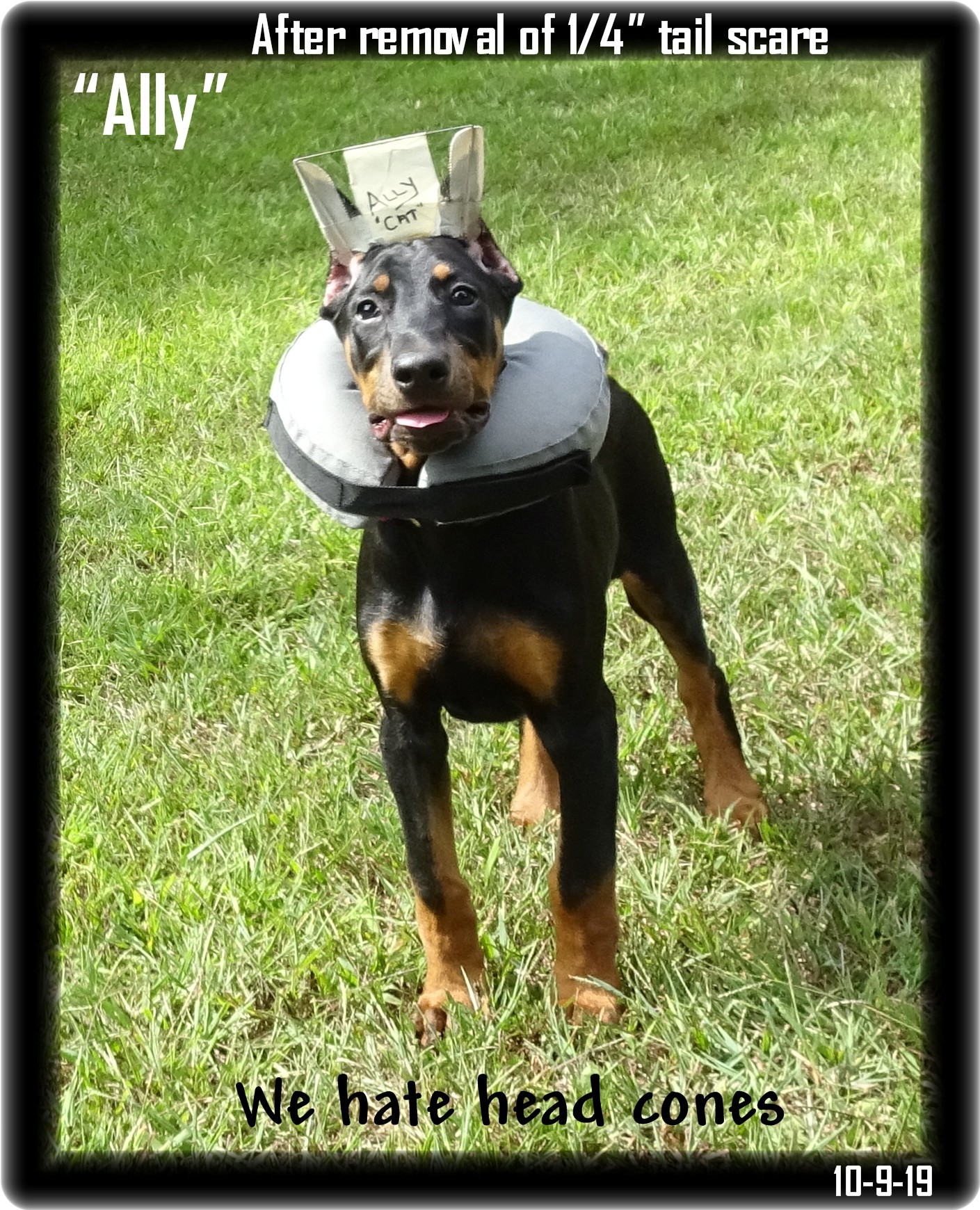 greta-pup-ally-with-cone-779.jpg
