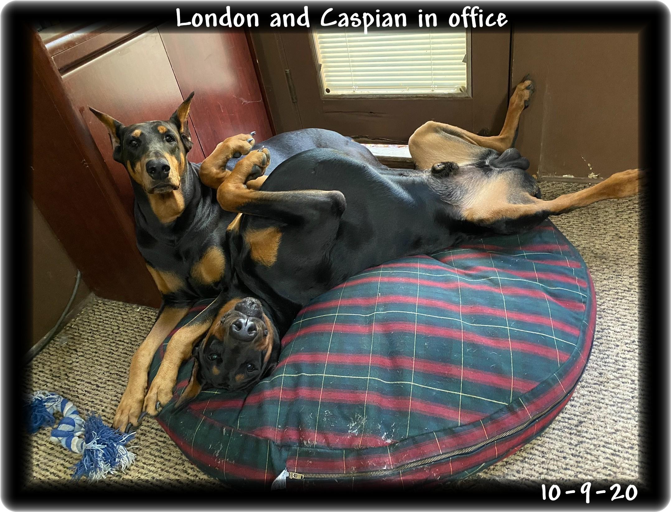 london-caspian-sleeping-togetherimg-5313.jpg