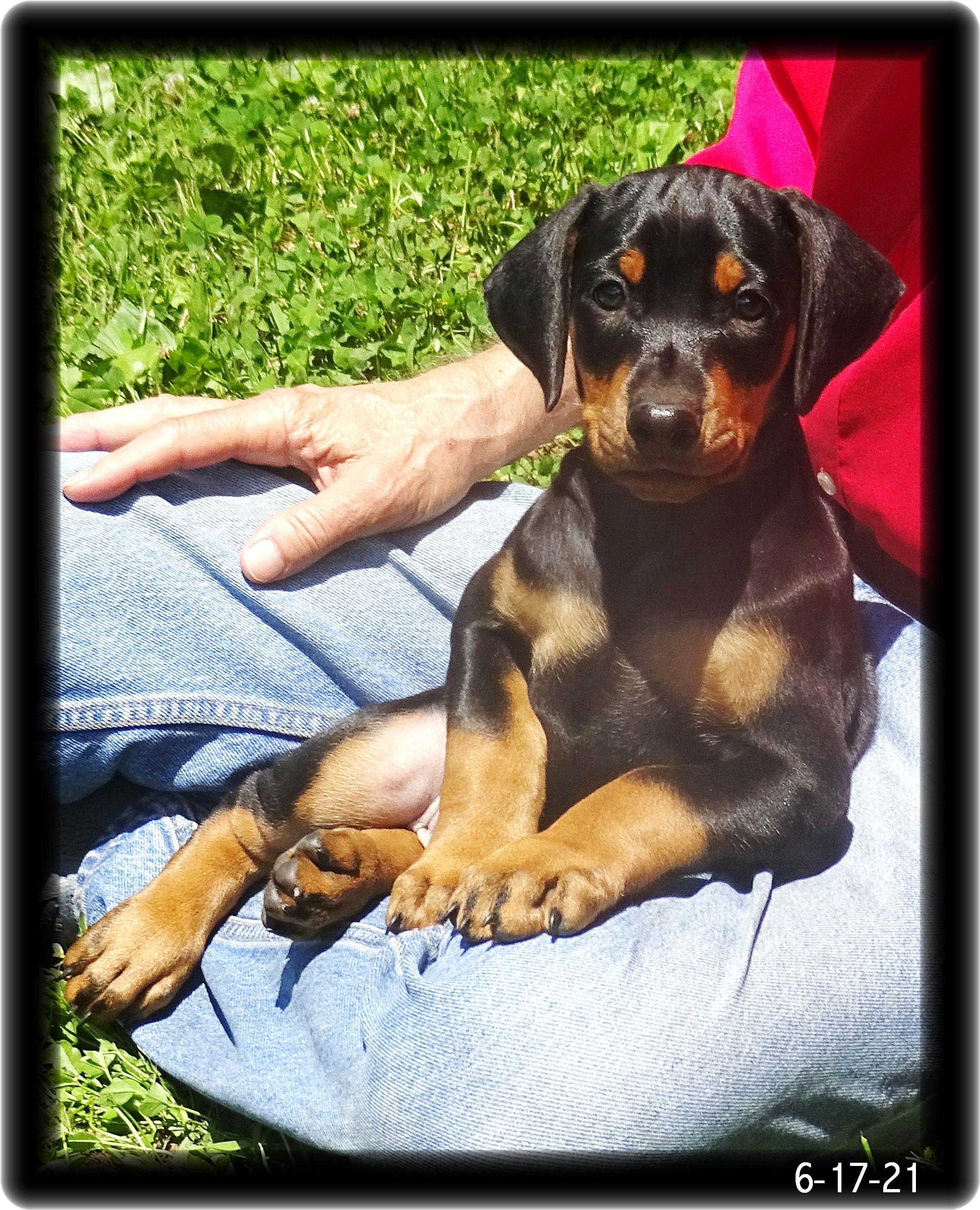 miska-s-pup-baby-kodiak-first-formal-outside-6-16-21-098.jpg