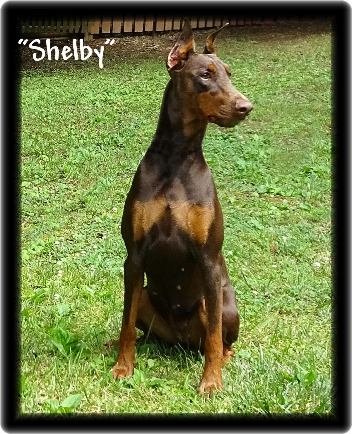 shelby-067.jpg