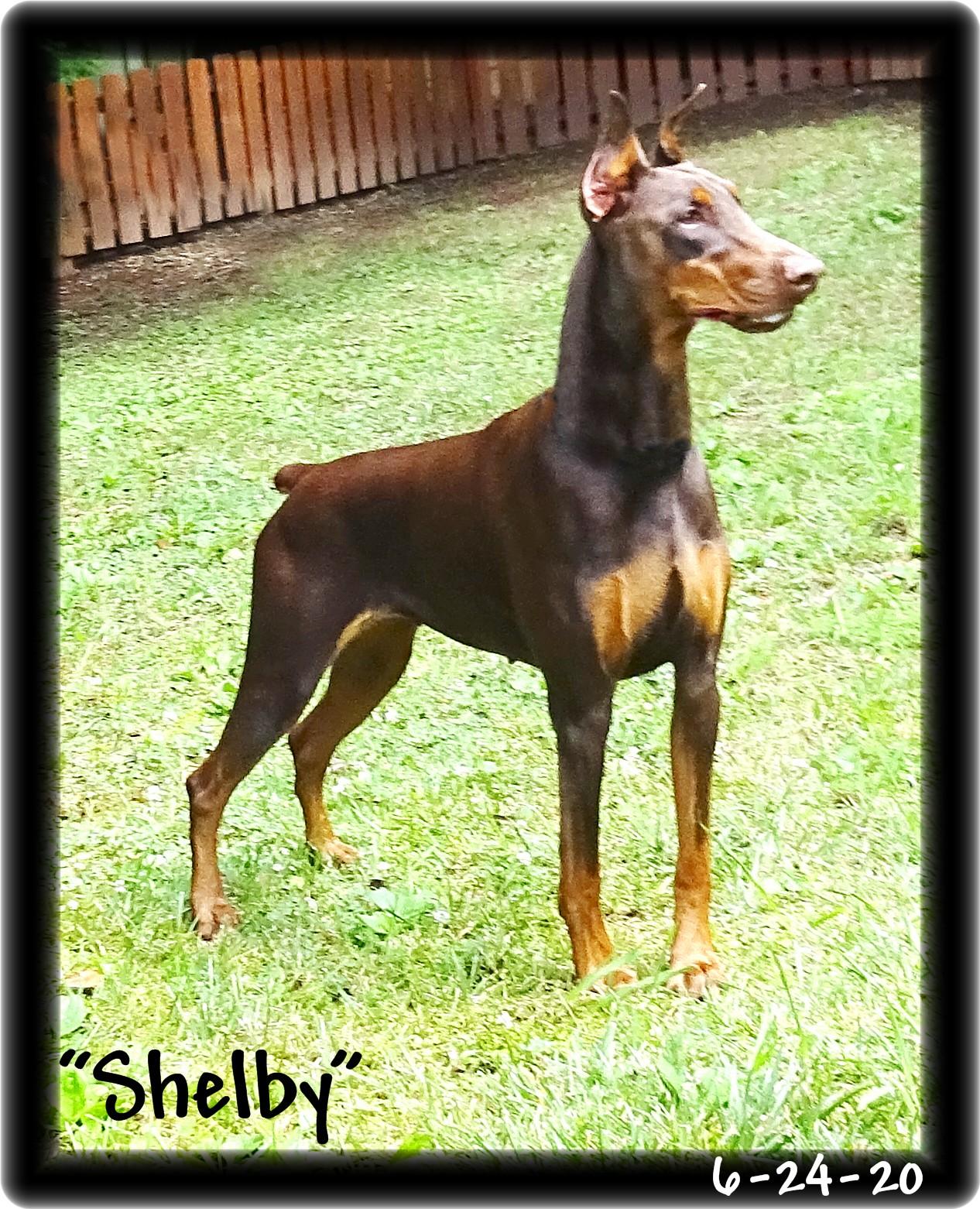 shelby-115.jpg