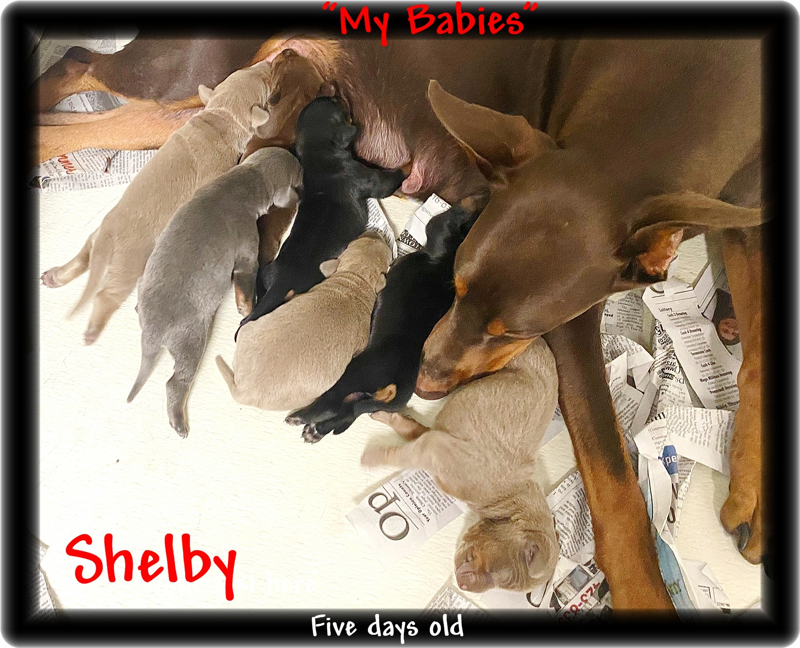 shelby-pups-9-8-20img-5138.jpg