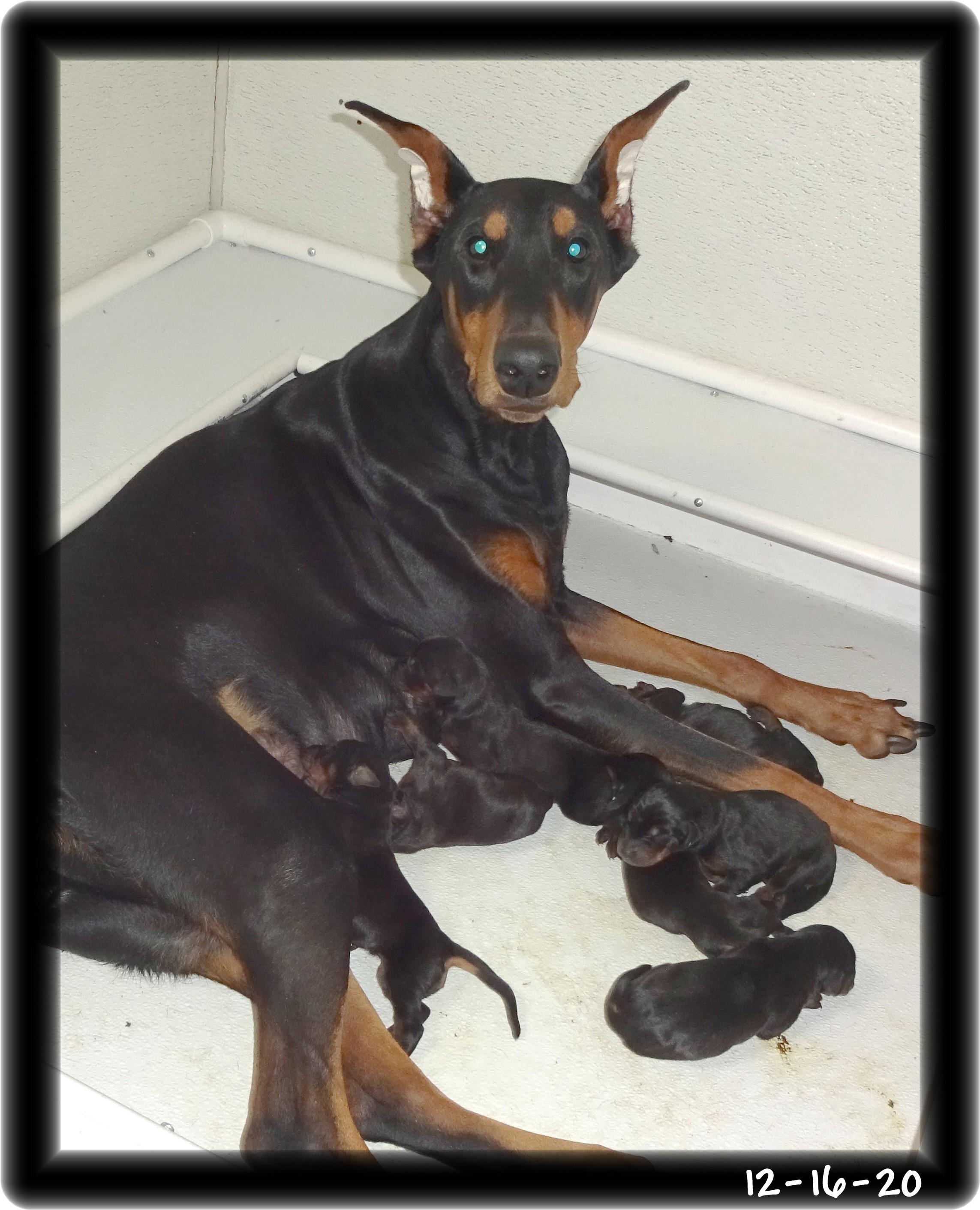 tiki-first-baby-photos-12-16-20-001.jpg