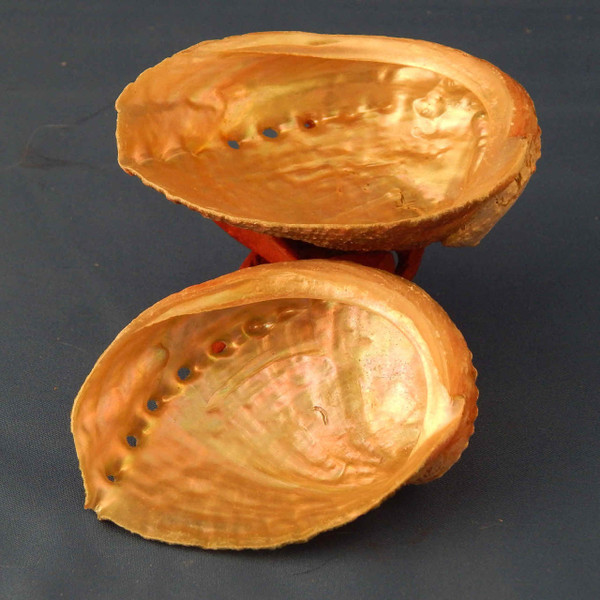 (HO300E3) Abalone Shell, small