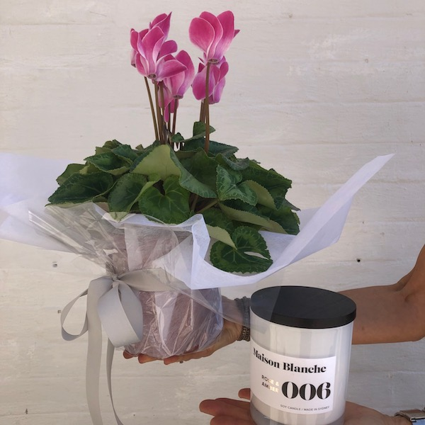 Send maison blanche candle and flowering plant