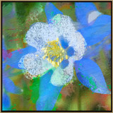Picture of Aspen Summer by Rose Freeland with frame