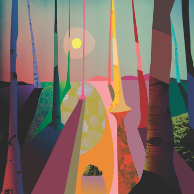 Birch Forest by Phil Leith-Tetrault