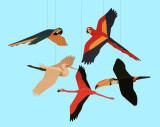 Skyflight Tropical Birds Mobile
