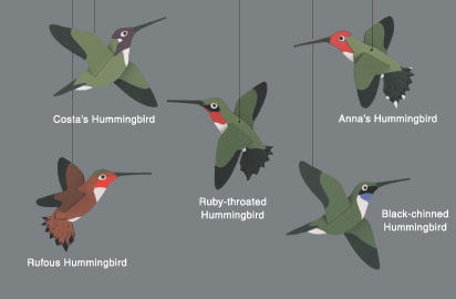 Skyflight Hummingbirds Mobile