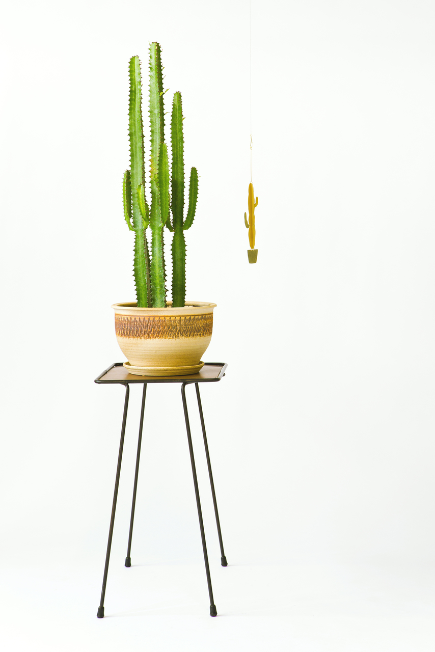Natalie Joy Euphorbia Acruensis Mobile