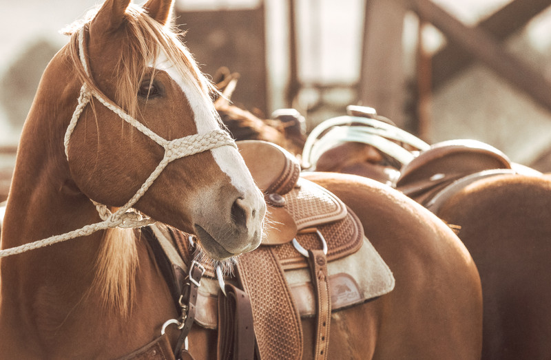Colic 101 and 8 Steps to Reduce Colic Risk