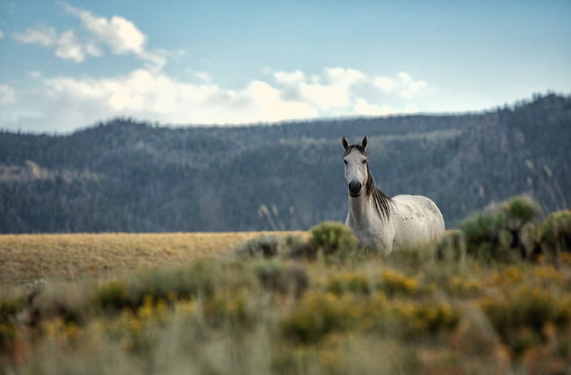 The Importance of the Equine Immune System