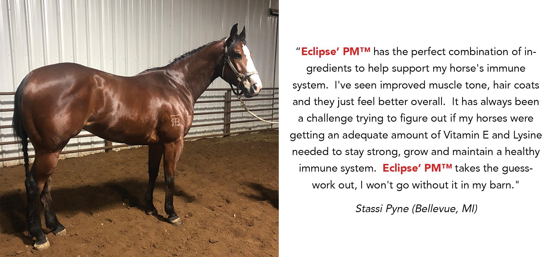 eclipsetestimony-stassipyne-2020.rev.jpg