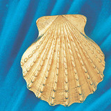 Seashell Slide Pendant Necklace Charm Bracelet in Gold or Silver 72