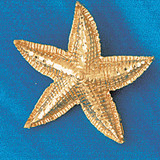 Starfish Charm Bracelet or Pendant Necklace in Yellow, White or Rose Gold DZ-82 by Dazzlers