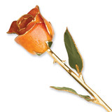 Orange Rose Lacquer Dipped Gold Trimmed GP9347
