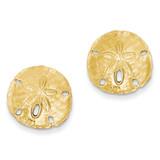 Large Sanddollar Post Earrings 14k Gold TC590