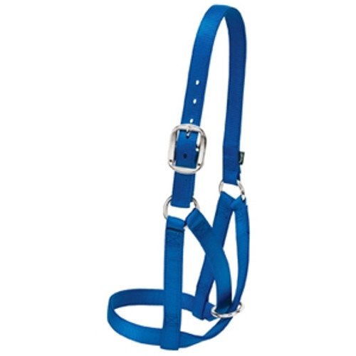 Barn Cow Halter- Medium