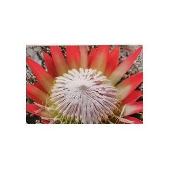 PVC/ Felt Placemats - Set of 6 - Giant King Protea