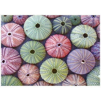 Disposable Placemat - Pack of 24 - Sea Urchins
