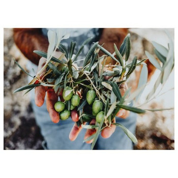 Disposable Placemat - Pack of 24 - Hands With Olives
