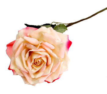Bella Off White and Pink Rose  (57cm)