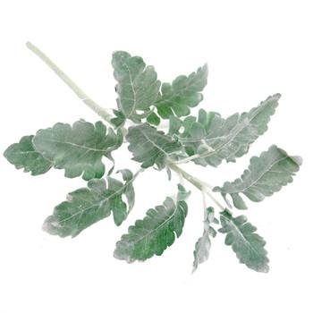 Dusty Miller Green Leaf (47.5cm)