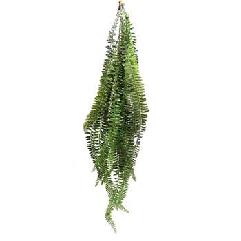 Ten Branch Sword Fern (130cm)